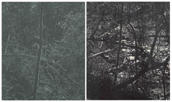 Peter Eastman; Forest, two