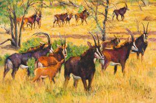 Zakkie Eloff; Herd of Sable Antelope