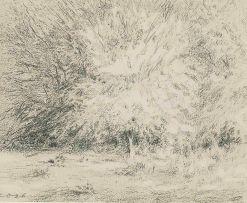 Carl Ossmann; Baum Skizze (Tree Sketch)