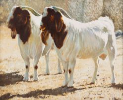 Leigh Voigt; Two SA Improved Boer Goats