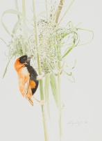 Leigh Voigt; Southern Red Bishop