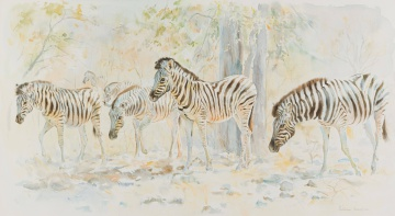 Patricia Mary Vaughan; Zebra Moving to Water