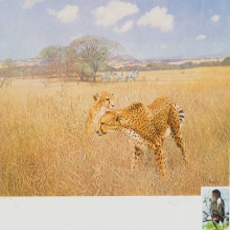 Roy Peter Reynolds; Cheetah and Zebras